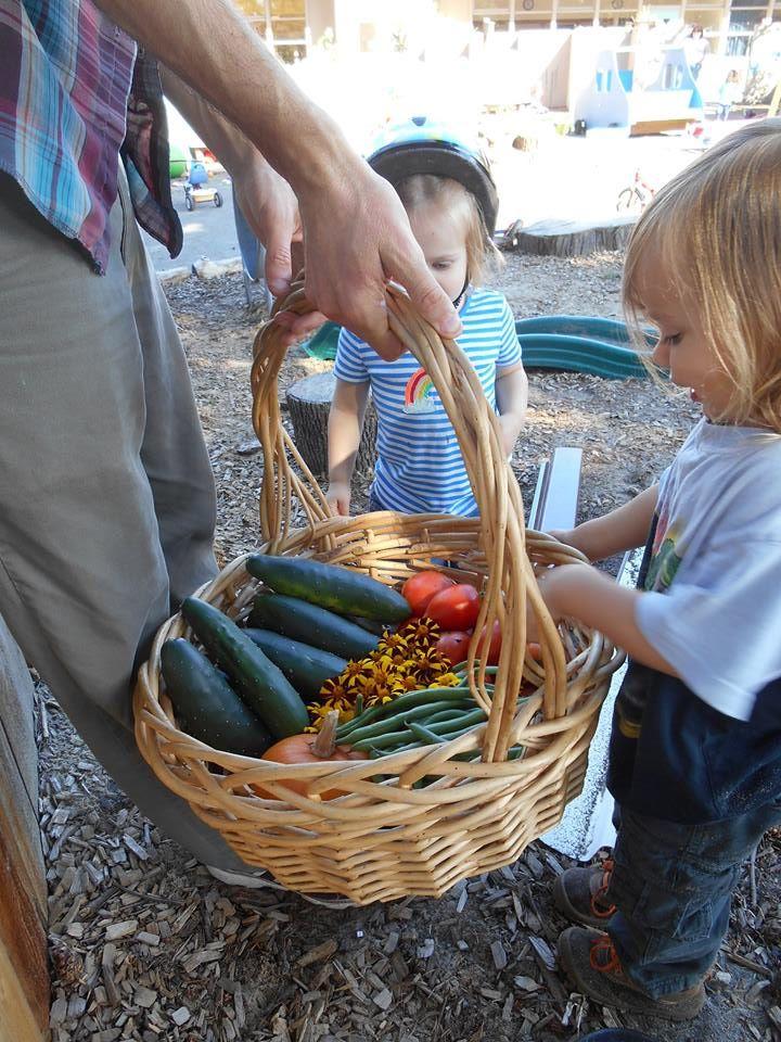Our Kitchen & Garden